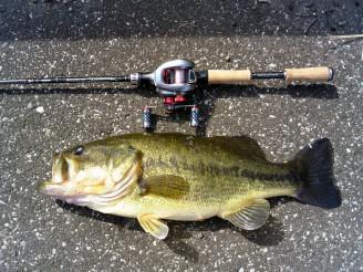 4.12 夷隅の野池1 52cm